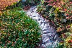 Höstträdgård med strömvatten på den Eikando Zenrinji templet royaltyfri fotografi