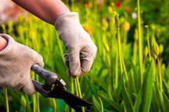 höstträdgårdleaves som krattar arbete Royaltyfri Fotografi