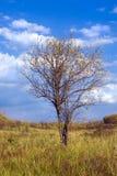hösttree Arkivbild