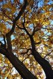 hösttree Arkivfoton