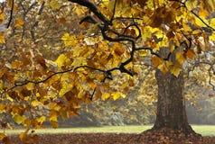 Hösttree Royaltyfri Fotografi