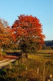 hösttree Fotografering för Bildbyråer