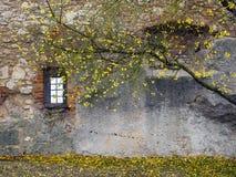 Hösttree med den gammala väggen Fotografering för Bildbyråer
