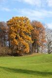 hösttrees Royaltyfri Foto