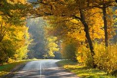 Höstunderland Väg i gul natur för nedgångskognedgång arkivbild