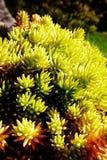 Höstväxt Royaltyfria Bilder