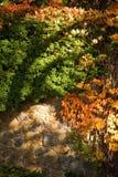 Höstväxter Royaltyfri Fotografi