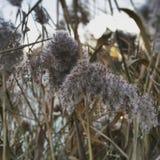 Höstväxter Arkivfoton
