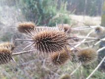Höstväxter Arkivbilder
