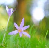 Höstvildblomma Royaltyfria Bilder