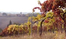 Höstvingårdar i Tuscany rome för italy navonapiazza lopp Himmel- och fältwinorada royaltyfria bilder