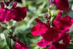 Höstvis man i blom Royaltyfri Foto