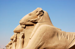 hövdade sphinxes för karnakluxor RAM Arkivfoto