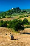 Hövolm och träd i solig tuscan bygd, Italien Royaltyfri Fotografi
