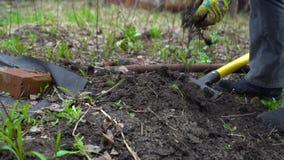 Húmus de escavação da jovem mulher pelo forcado Preparação do solo para plantar Com encerado Fim acima Movimento lento 120fps filme