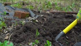 Húmus de escavação da jovem mulher pelo forcado Preparação do solo para plantar Com filme da tampa Fim acima Movimento lento 120f video estoque