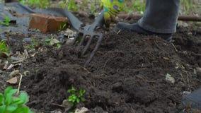 Húmus de escavação da jovem mulher pelo forcado Preparação do solo para plantar Com terra preta Fim acima Movimento lento 120fps filme