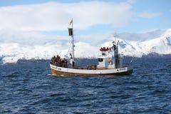 Húsavíkwalvis het letten op boot Stock Fotografie