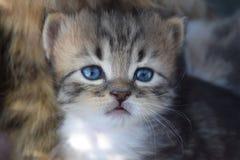 Hübsch ein kleines Kätzchen stockfoto