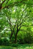 Hübsche Bäume Stockbild