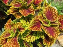 Hübsche Blätter im Frühjahr im Juni Lizenzfreie Stockfotos