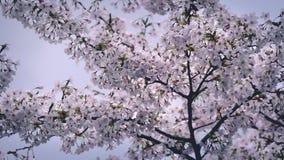 Hübsche Blüten am sonnigen Tag stock video footage