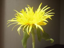 Hübsche Blume Stockbilder
