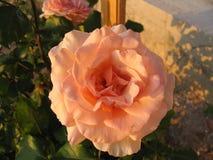 Hübsche Blume Stockfotografie