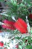 Hübsche Blume Lizenzfreies Stockbild
