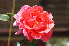 Hübsche Blume Stockfotos