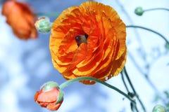 Hübsche Blume Stockfoto