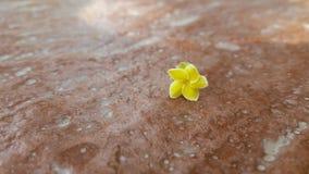 Hübsche Blume Lizenzfreie Stockfotos