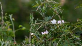 Hübsche Blume sehen beim Gehen auf Wald lizenzfreie stockbilder