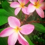Hübsche Blumen Lizenzfreies Stockbild