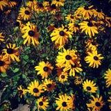 Hübsche Blumen stockfoto