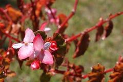 Hübsche Blumen auf einem Baum Stockfoto