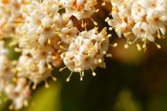 Hübsche Blumen im Weiß fotographie lizenzfreie stockbilder