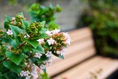 Hübsche Blumen u. Holzbank Stockfotografie