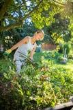 Hübsche, junge Frau, die in ihrem Garten im Garten arbeitet stockfotos