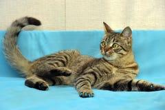 Hübsche junge Katze der getigerten Katze lizenzfreie stockfotos