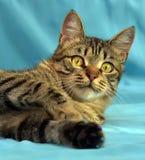 Hübsche junge Katze der getigerten Katze stockfotografie