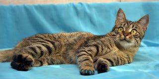 Hübsche junge Katze der getigerten Katze lizenzfreies stockfoto