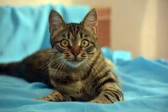 Hübsche junge Katze der getigerten Katze lizenzfreie stockfotografie