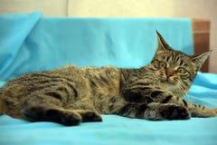 Hübsche junge Katze der getigerten Katze stockfoto