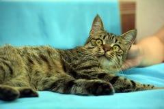 Hübsche junge Katze der getigerten Katze lizenzfreie stockbilder
