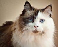 Hübsche Katze lizenzfreie stockfotografie