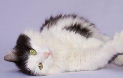 Hübsche Katze Stockfoto