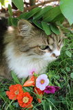 Hübsche Katze Stockbilder