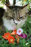 Hübsche Katze Lizenzfreie Stockbilder