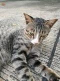 Hübsche Katze Stockfotografie